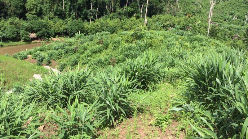02-Broomgrass Farming