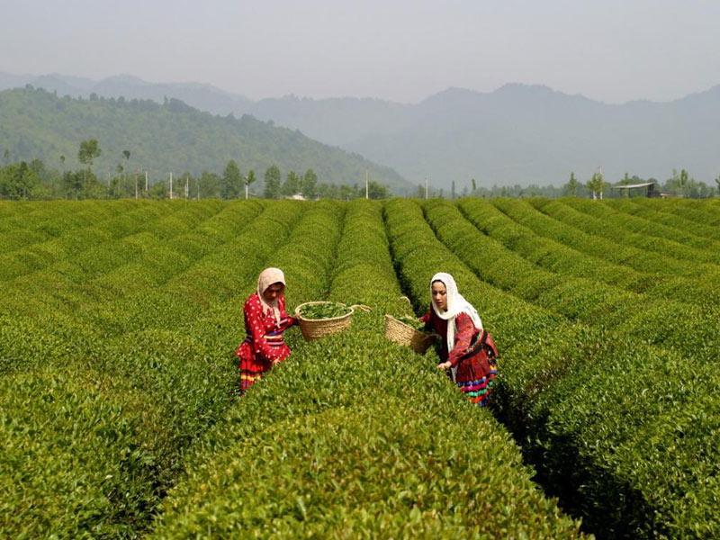 Berbagai Negara Asia Teratas Dalam Bidang Pertanian Organik