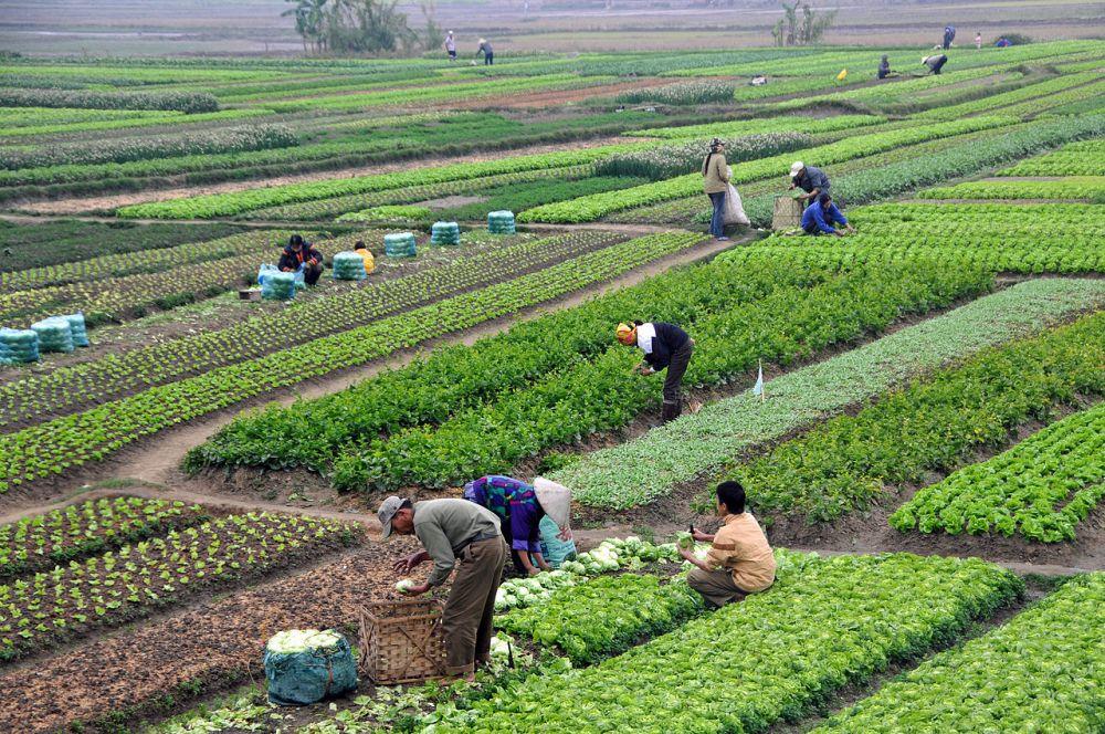 Cara Pertanian Dalam Meningkatkan Kehidupan di Asia