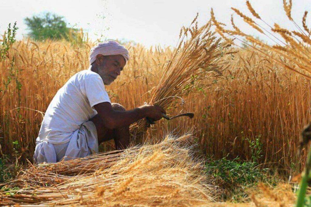 Komoditas Pertanian Yang Dihasilkan di India Saat Ini I