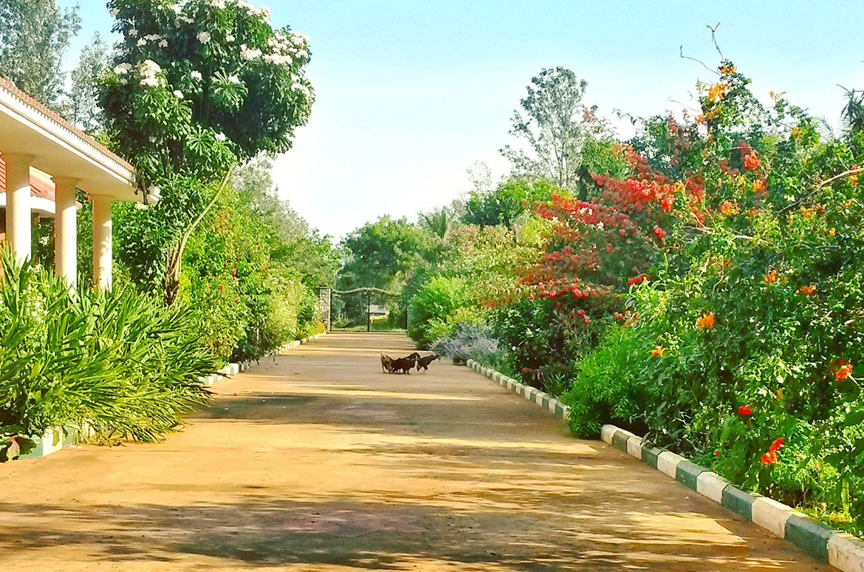 Lahan Pertanian Organik Terbaik Untuk Dikunjungi di India