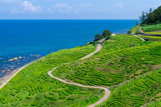 Pemandangan Terasering Pertanian Sawah Terbaik di Jepang