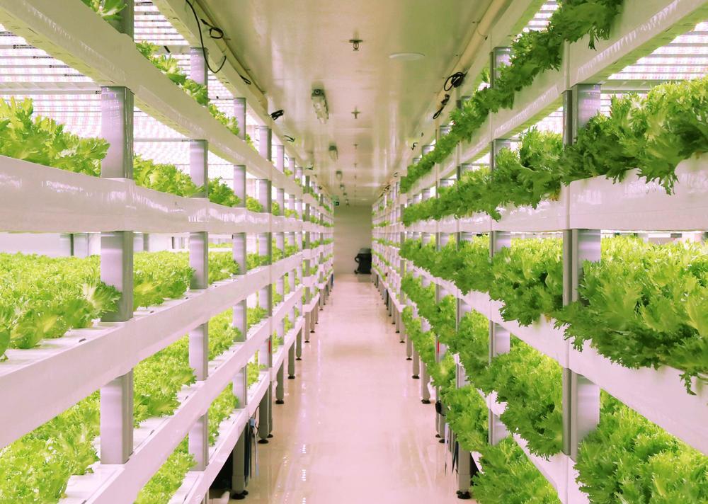 Perkebunan & Pertanian Sayuran Organik di Singapura I